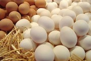 چرا تخم مرغ گران شد؟ ماهانه ۴ هزار تن صادر میشود