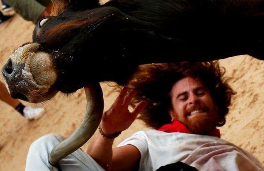 پرتاب شدن یک فرد توسط یک گاو وحشی در فستیوال سن فرمین، بزرگترین جشن گاوبازی سرزمین ماتادورها در پامپلونا اسپانیا