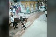 فیلم | تصادف عجیب یک ماشین با گاری و یک الاغ!