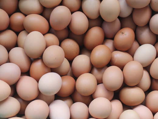صادرات تخممرغهای فاسد به عراق!