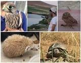 ۵ گونه حیاتوحش در چهارمحال و بختیاری درمان و به طبیعت بازگشتند