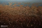 وزارت نیرو: ۲۹ میلیون نفر در تابستان درگیر تنش آبی میشوند