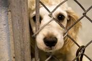قیمتها دربازار خرید و فروش حیوانات خانگی چگونه تعیین می شود؟/ماهی یک میلیونی،سگ40میلیونی و...