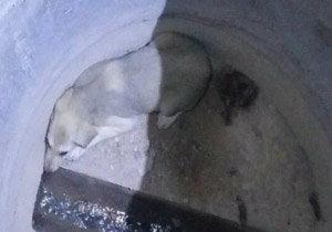 نجات جان یک سگ گرفتار در چاه آب در مهاباد