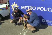 فیلم | مدال خدمت بر گردن سگ ردیاب پلیس!