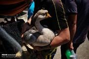 تصاویر | بازار پرنده فروشان «خلیج فارس» در تهران