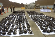 فیلم | انهدام ۱۱.۰۰۰ اسلحه در پرو