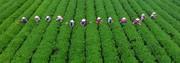 کشورهایی که یک متر مربع زمین بایر ندارند / ابرقدرتهای کشاورزی در دنیا کدامند؟