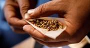 توصیه  سخنگوی ستاد مبارزه با موادمخدر: به جای حشیش، کاکائو مصرف کنید