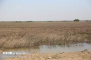 زمینهای سیل زده خوزستان برای کشت تابستانه آماده هستند