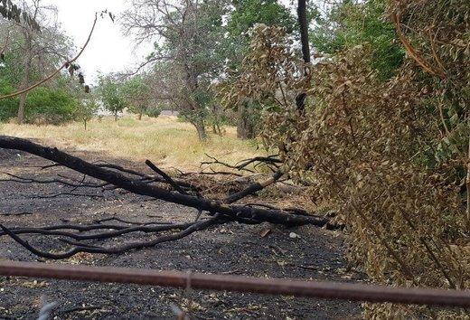ماجرای سوزاندن و بریدن درختان محوطه لشکر ۶۴ ارومیه چیست؟