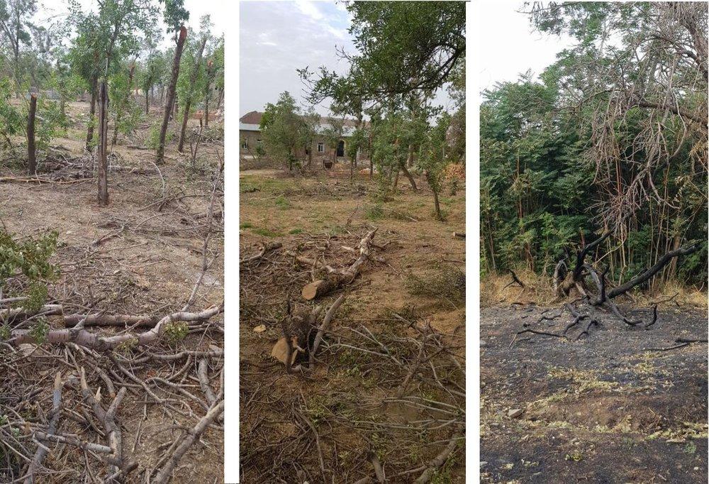 تصاویر سوزاندن درختان محوطه لشکر
