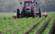 سالانه ۸۰۰ هزار هکتار از اراضی زیر کشت سبزی و صیفی می رود