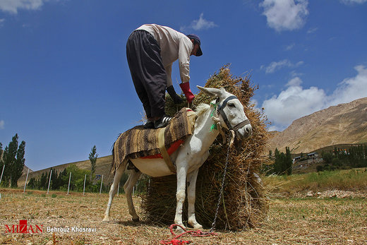 زندگی روستایی در مازندران
