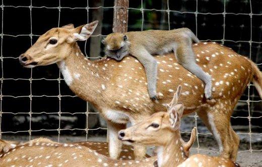 همزیستی حیوانات