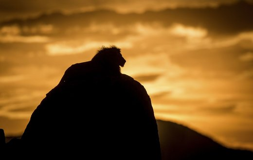 پارک ملی دره کیدپو در اوگاندا