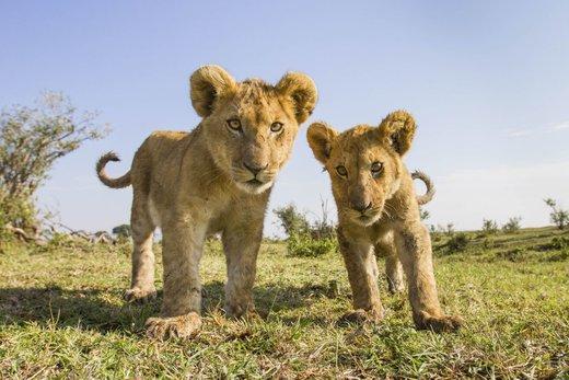 پارک ملی Liuwa Plain در زامبیا