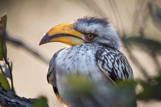 پارک ملی Bwabwata در نامیبیا