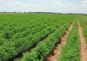 صادرات ۱۰ هزار تن محصول یک مزرعه در البرز