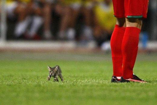 ورود حیوانات به محل برگزاری مسابقات ورزشی