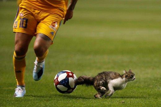 ورود یگ گربه به محل برگزاری بازی فوتبال در شهر سالتلیکسیتی ایالت یوتا آمریکا