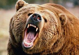 جزئیات حمله خرس گرسنه به مأموران محیط زیست یاسوج