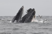 عکس | قلب غولپیکر یک نهنگ !
