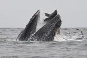 تصاویر | لحظه فرار شیر دریایی از دهان نهنگ