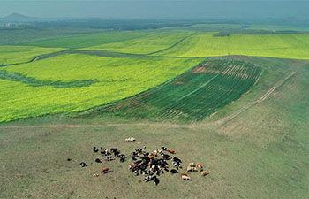 روزشمار مصرف زمین آغاز شد