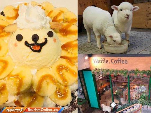 کافه گوسفندی در کره جنوبی - سئول -