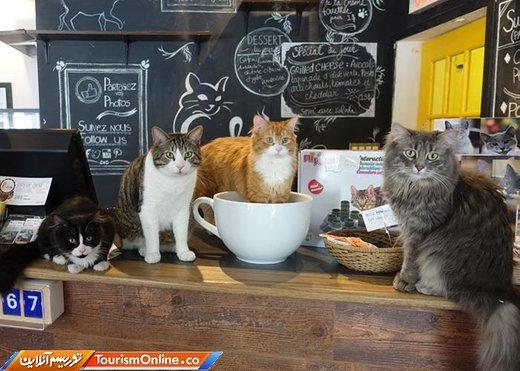 کافه گربه ای در کانادا - مونترال -