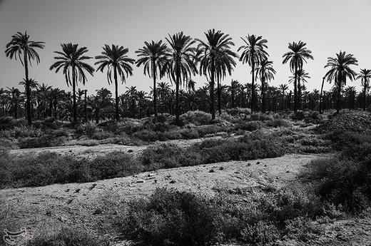 شادگان با حدود ۱۵۰ هزار نفر جمعیت در ۷۰ کیلومتری اهواز مرکز استان خوزستان واقع شده است