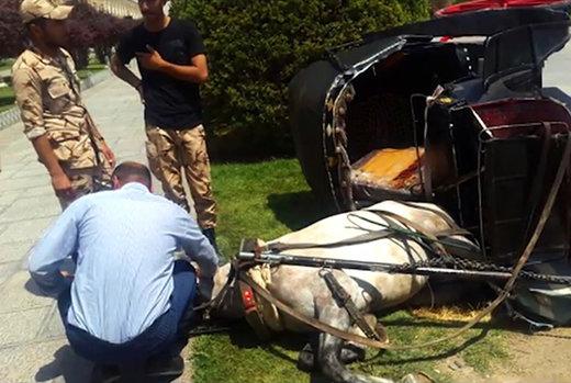 فیلم | اعتراض اسبها به شرایط سخت کار در میدان نقش جهان!