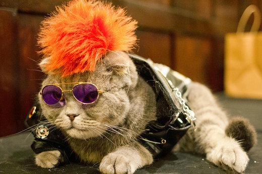 فیلم | برگزاری شوی لباس گربهها در نیویورک!