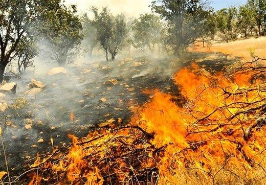 ۴ عامل انسانی در آتشسوزی چوار شناسایی شدند