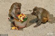 تصاویر | حیواناتی که در باغ وحش میوه و بستنی میخورند