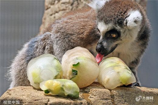 باغ وحش یانتای در استان شاندونگ چین