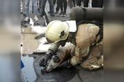 فیلم | تلاش آتشنشانان تهرانی برای نجات سگ گرفتار در حریق یک مغازه