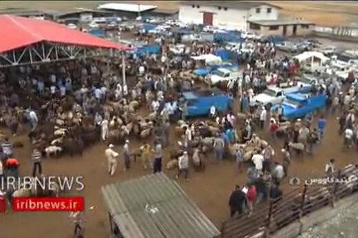 فیلم | بازار فروش دام زنده در آستانه عید قربان و چند نکته مهم