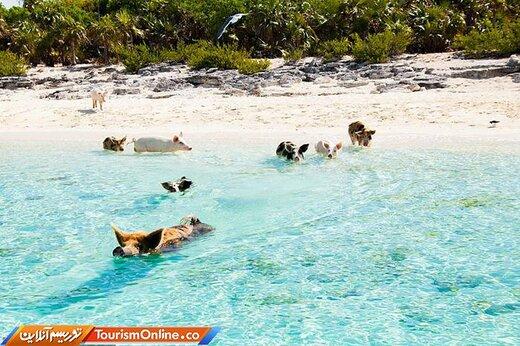 ده: ساحل پیگ(خوک) –باهاماس-