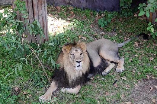 فیلم و عکس   شروع زندگی مشترک هیرمان و ایلدا در باغوحش