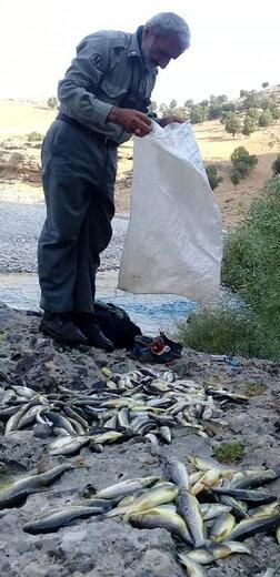 دو نفر صیاد متخلف در شهرستان کوهرنگ با ۱۳۵ قطعه ماهی شناسایی و دستگیر شدند