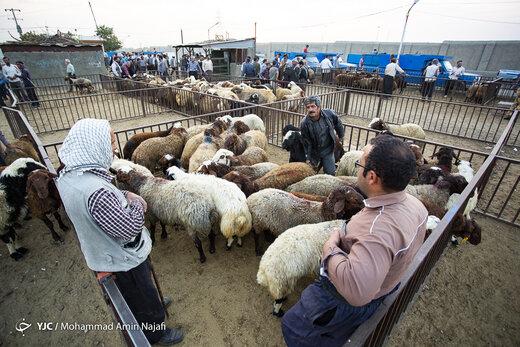 بازار فروش دام عید قربان در همدان