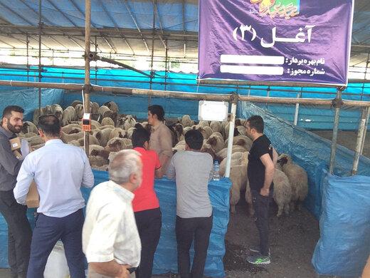 شهرداری تهران ۲۴ مرکز بهداشتی فروش و ذبح گوسفند دایر کرد