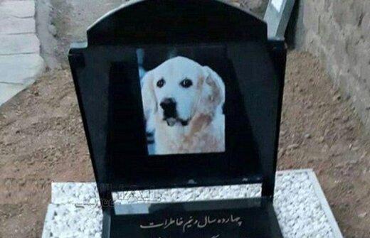 دستگیری کسانی که لاشه سگ را در مسجد دفن کردند