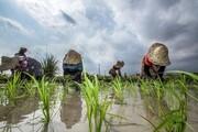 توضیح جهانگیری درباره واردات برنج: برای  ایجاد آرامش در بازار و اطمینان خاطر مردم است