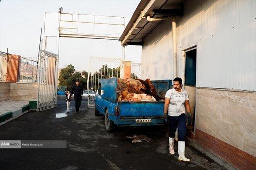 بازار فروش دام در تهران