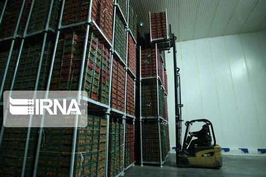 شرایط جدید صادرات میوه اعلام شد