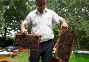 زنبورها این مرد صومعه سرایی را نیش نمیزنند / تصاویر