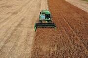 فائو: روزانه ۴۰۰ میلیارد دلار غذا حرام میشود